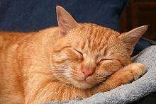 Gli animali non dormono 8 ore di fila
